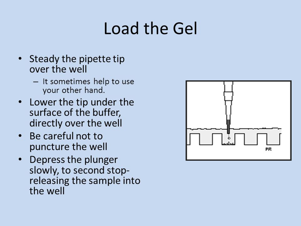 Load the Gel Steady the pipette tip over the well – It sometimes help to use your other hand.