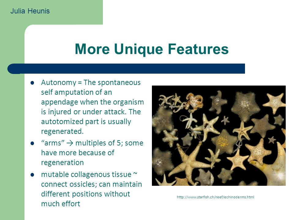 More Unique Features Autonomy = The spontaneous self amputation of an appendage when the organism is injured or under attack.