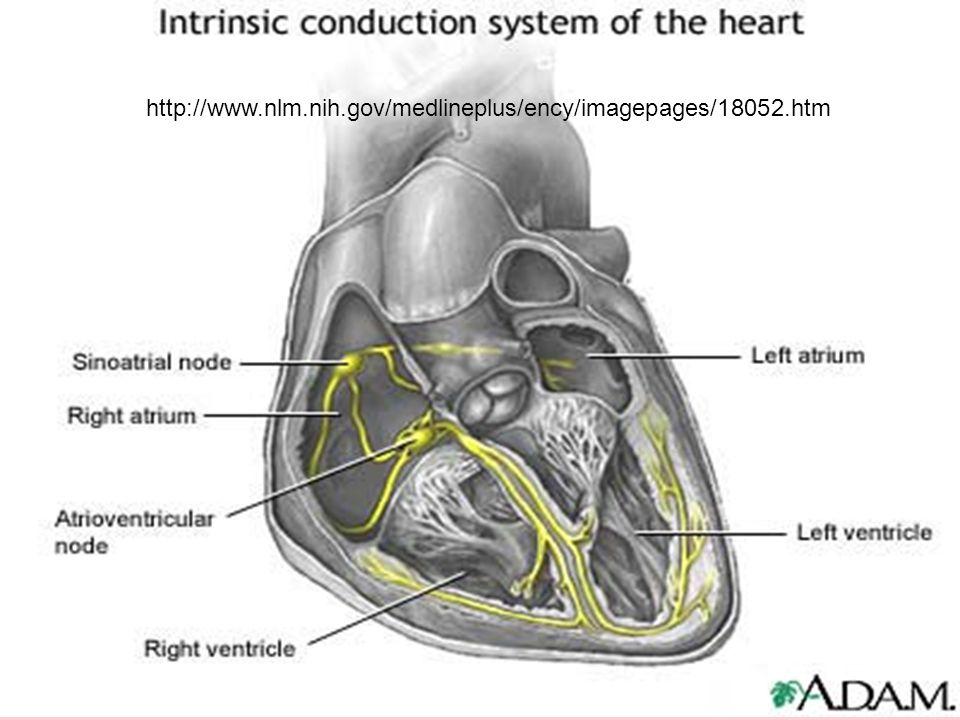 http://www.nlm.nih.gov/medlineplus/ency/imagepages/18052.htm