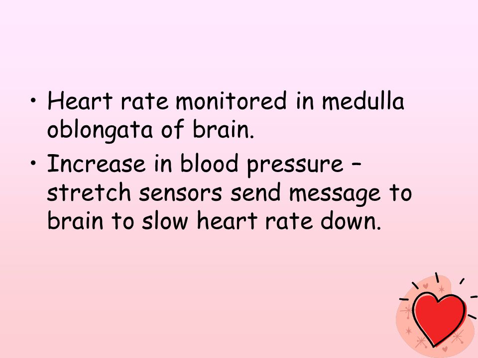 Heart rate monitored in medulla oblongata of brain.