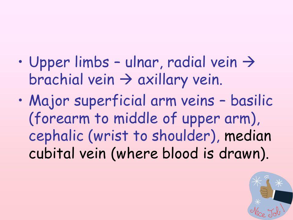 Upper limbs – ulnar, radial vein  brachial vein  axillary vein.