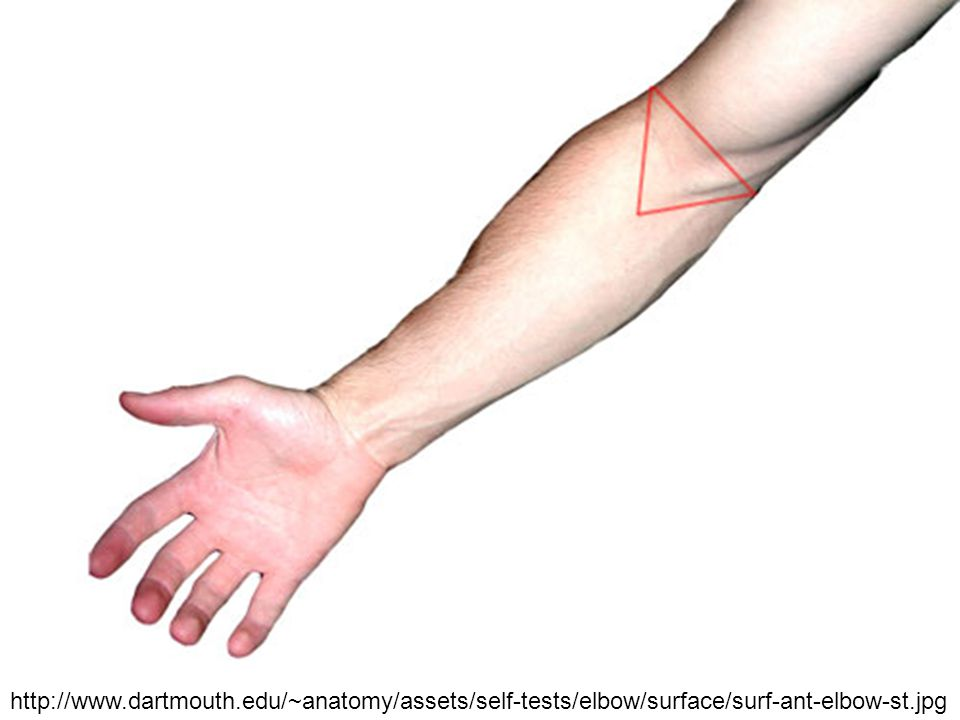 http://www.dartmouth.edu/~anatomy/assets/self-tests/elbow/surface/surf-ant-elbow-st.jpg