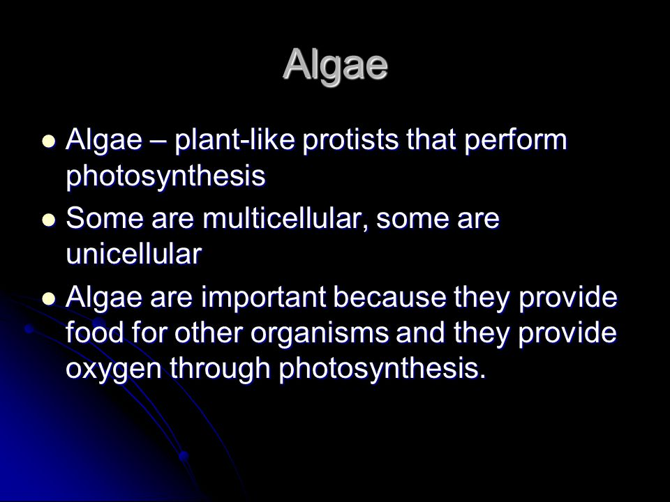 Algae Algae – plant-like protists that perform photosynthesis Algae – plant-like protists that perform photosynthesis Some are multicellular, some are unicellular Some are multicellular, some are unicellular Algae are important because they provide food for other organisms and they provide oxygen through photosynthesis.