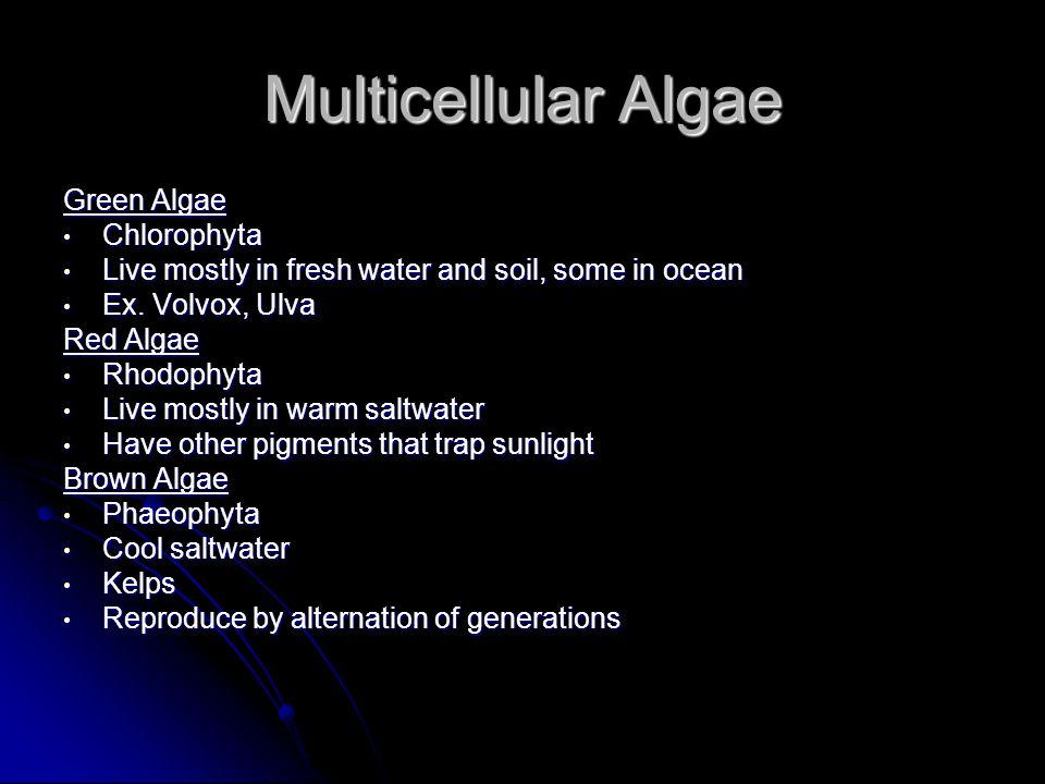 Multicellular Algae Green Algae Chlorophyta Chlorophyta Live mostly in fresh water and soil, some in ocean Live mostly in fresh water and soil, some in ocean Ex.