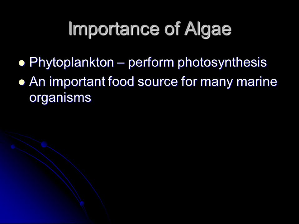 Importance of Algae Phytoplankton – perform photosynthesis Phytoplankton – perform photosynthesis An important food source for many marine organisms An important food source for many marine organisms