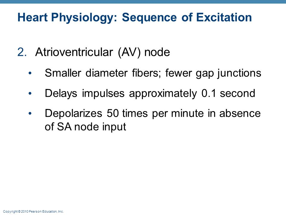 Copyright © 2010 Pearson Education, Inc. Heart Physiology: Sequence of Excitation 2.Atrioventricular (AV) node Smaller diameter fibers; fewer gap junc