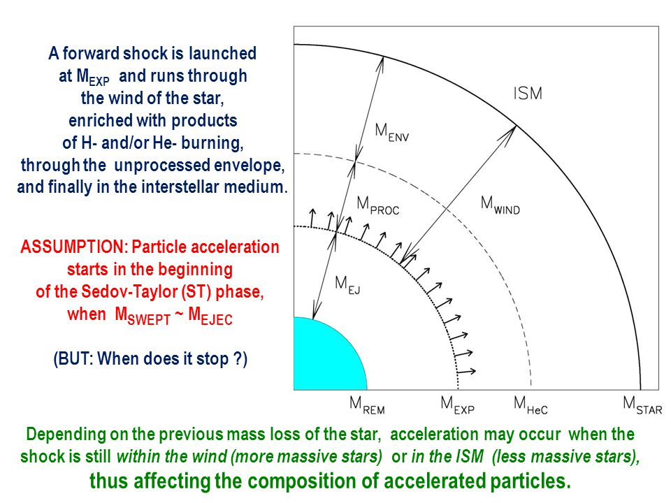 A forward shock is launched at M EXP and runs through the wind of the star, enriched with products of H- and/or He- burning, through the unprocessed envelope, and finally in the interstellar medium.