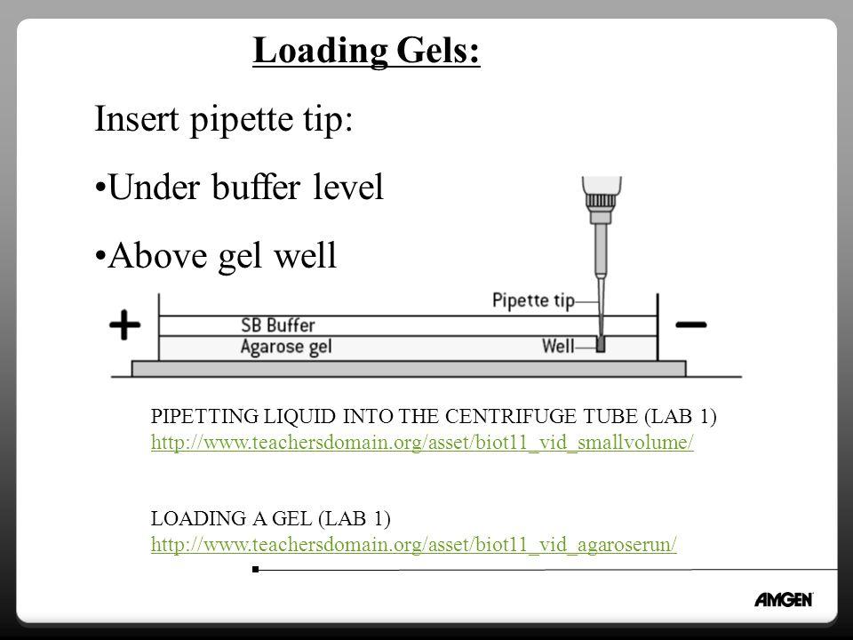 Loading Gels: Insert pipette tip: Under buffer level Above gel well PIPETTING LIQUID INTO THE CENTRIFUGE TUBE (LAB 1) http://www.teachersdomain.org/asset/biot11_vid_smallvolume/ LOADING A GEL (LAB 1) http://www.teachersdomain.org/asset/biot11_vid_agaroserun/