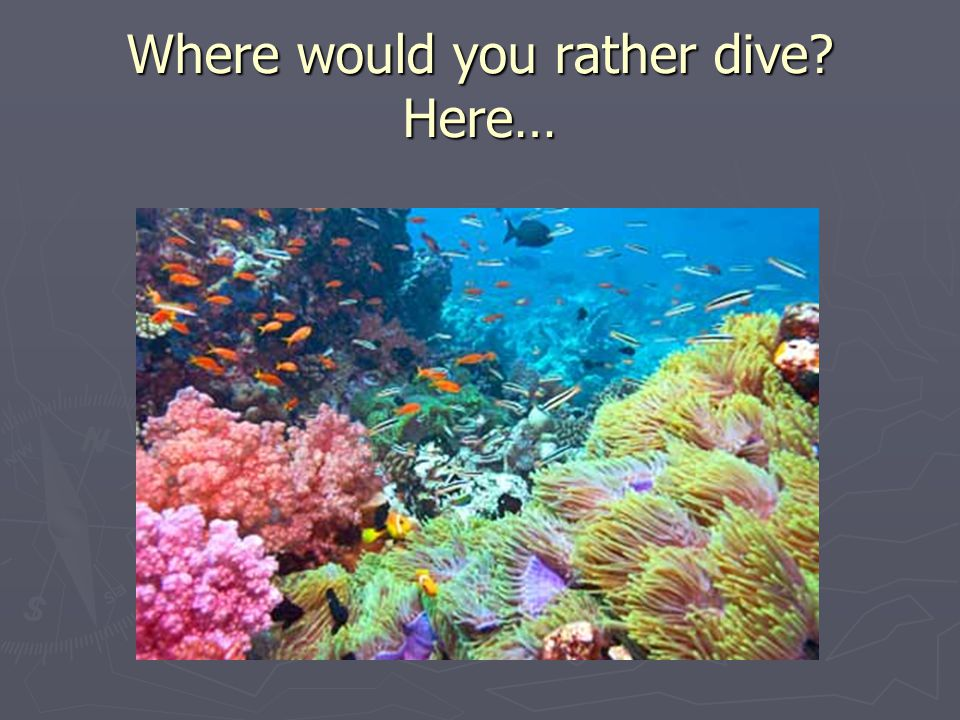 Where would you rather dive? Here…