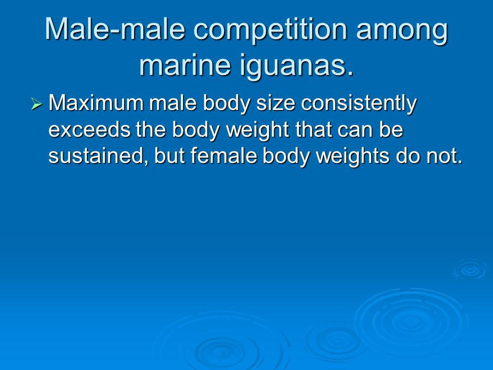 Male-male competition among marine iguanas.  Maximum male body size consistently exceeds the body weight that can be sustained, but female body weigh