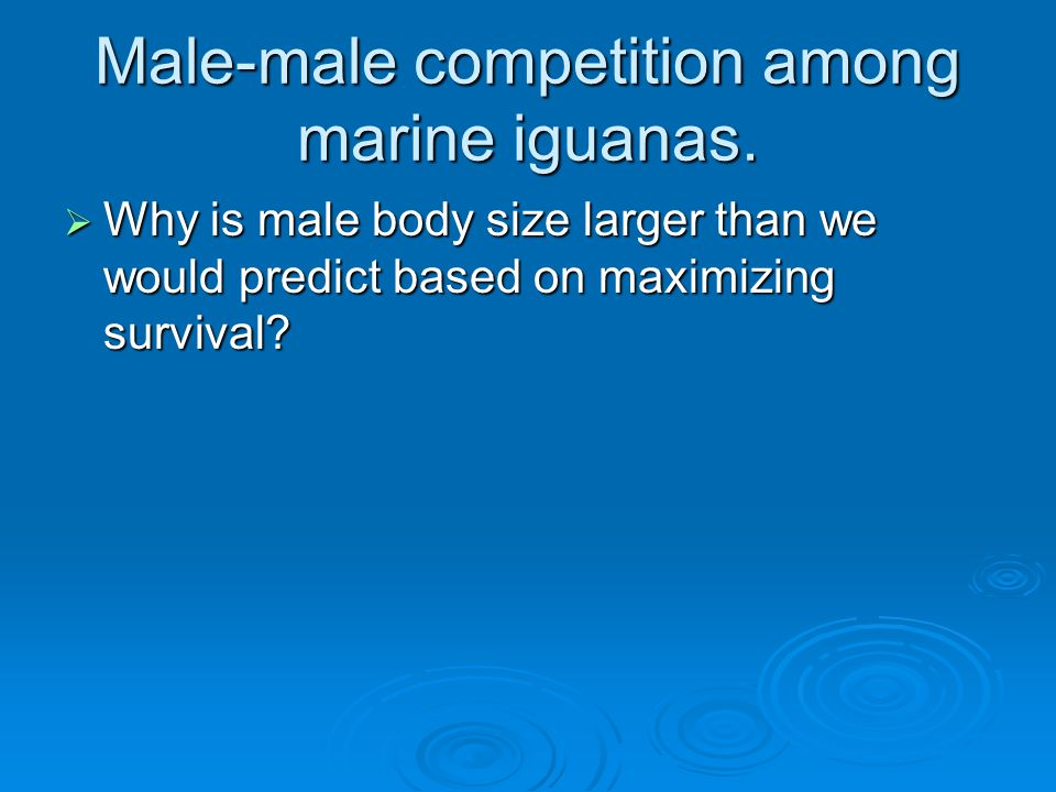 Male-male competition among marine iguanas.  Why is male body size larger than we would predict based on maximizing survival?