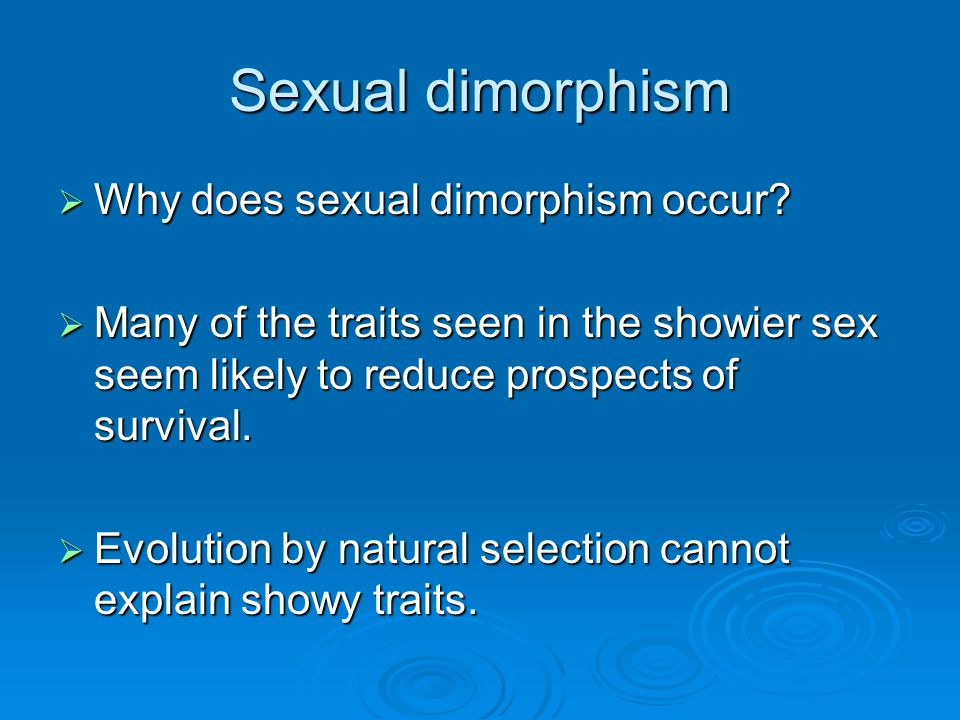 Sexual dimorphism  Why does sexual dimorphism occur?  Many of the traits seen in the showier sex seem likely to reduce prospects of survival.  Evol
