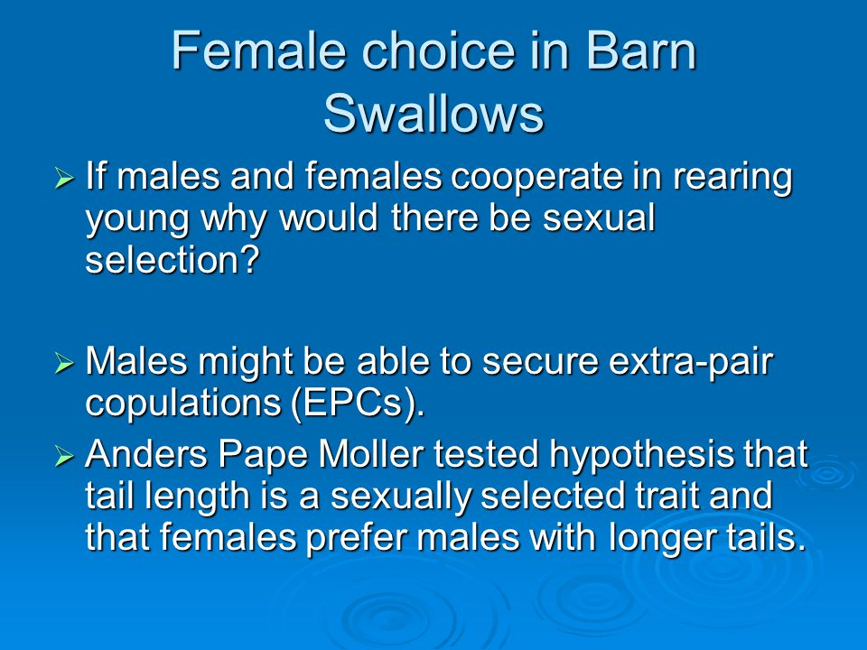 Female choice in Barn Swallows  If males and females cooperate in rearing young why would there be sexual selection?  Males might be able to secure