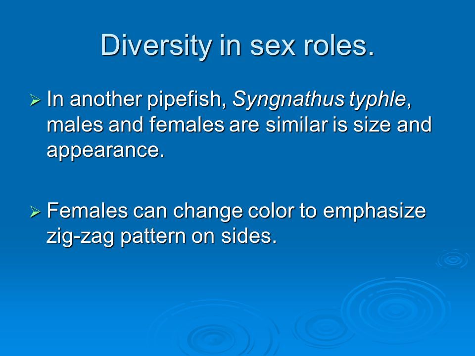 Diversity in sex roles.  In another pipefish, Syngnathus typhle, males and females are similar is size and appearance.  Females can change color to