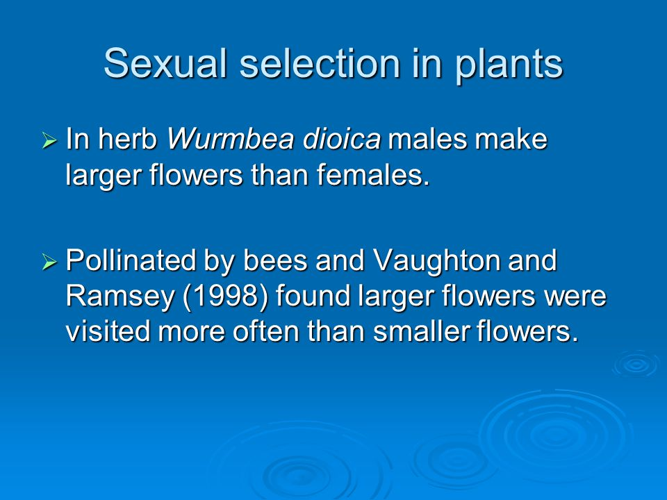 Sexual selection in plants  In herb Wurmbea dioica males make larger flowers than females.  Pollinated by bees and Vaughton and Ramsey (1998) found