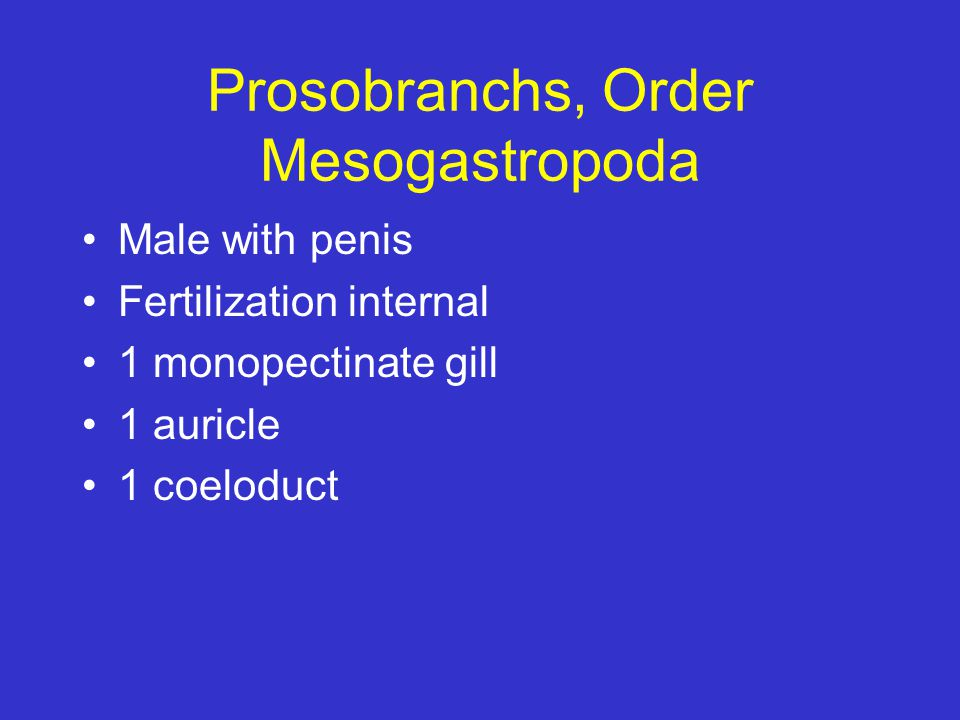 Prosobranchs, Order Mesogastropoda Male with penis Fertilization internal 1 monopectinate gill 1 auricle 1 coeloduct