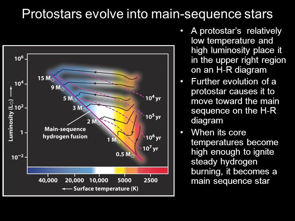 Protostars evolve into main-sequence stars A protostar's relatively low temperature and high luminosity place it in the upper right region on an H-R diagram Further evolution of a protostar causes it to move toward the main sequence on the H-R diagram When its core temperatures become high enough to ignite steady hydrogen burning, it becomes a main sequence star