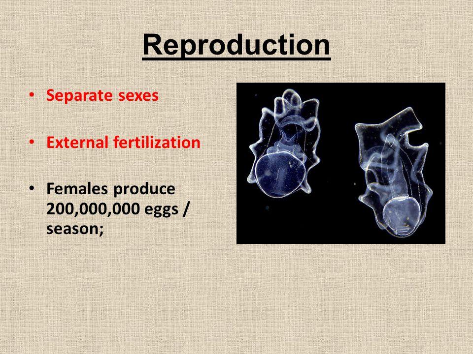 Reproduction Separate sexes External fertilization Females produce 200,000,000 eggs / season;