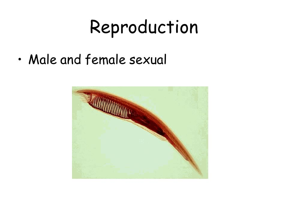 Reproduction Male and female sexual