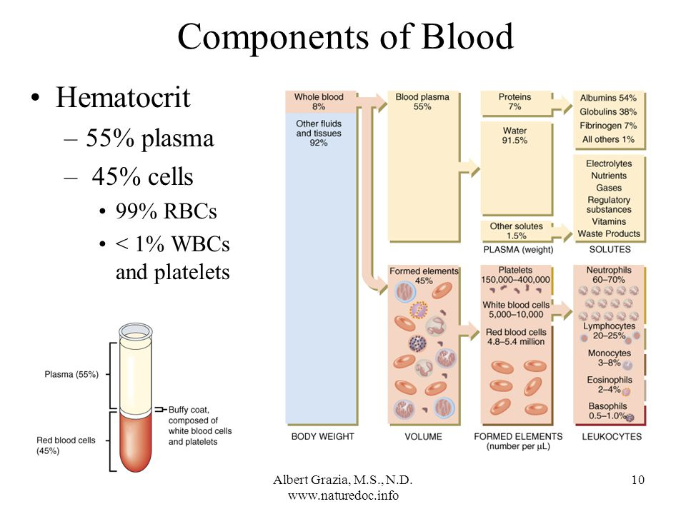 10 Components of Blood Hematocrit –55% plasma – 45% cells 99% RBCs < 1% WBCs and platelets