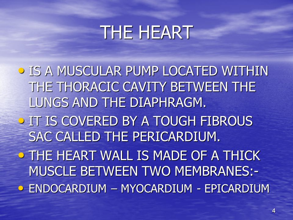 4 THE HEART IS A MUSCULAR PUMP LOCATED WITHIN THE THORACIC CAVITY BETWEEN THE LUNGS AND THE DIAPHRAGM.