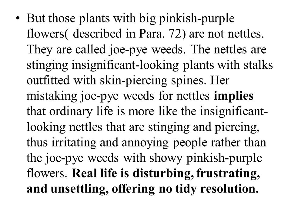 But those plants with big pinkish-purple flowers( described in Para. 72) are not nettles. They are called joe-pye weeds. The nettles are stinging insi