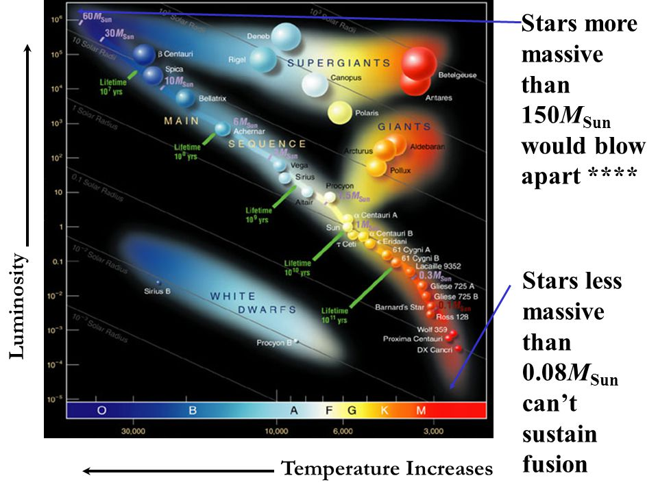 Temperature Increases Luminosity Stars more massive than 150M Sun would blow apart **** Stars less massive than 0.08M Sun can't sustain fusion