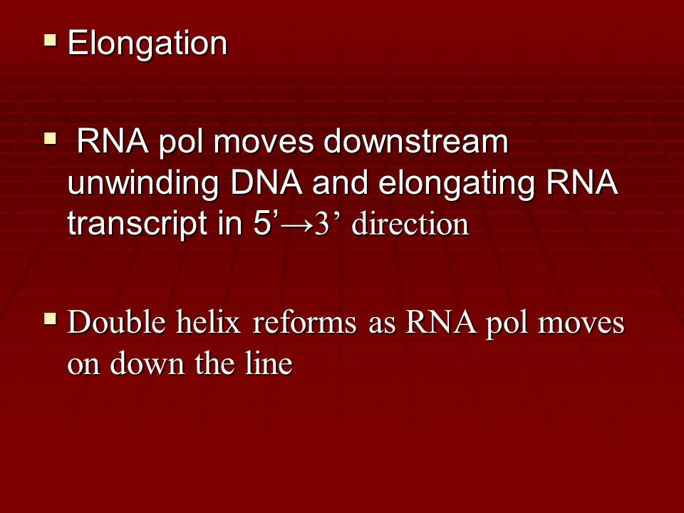  Elongation  RNA pol moves downstream unwinding DNA and elongating RNA transcript in 5' →3' direction  Double helix reforms as RNA pol moves on down the line