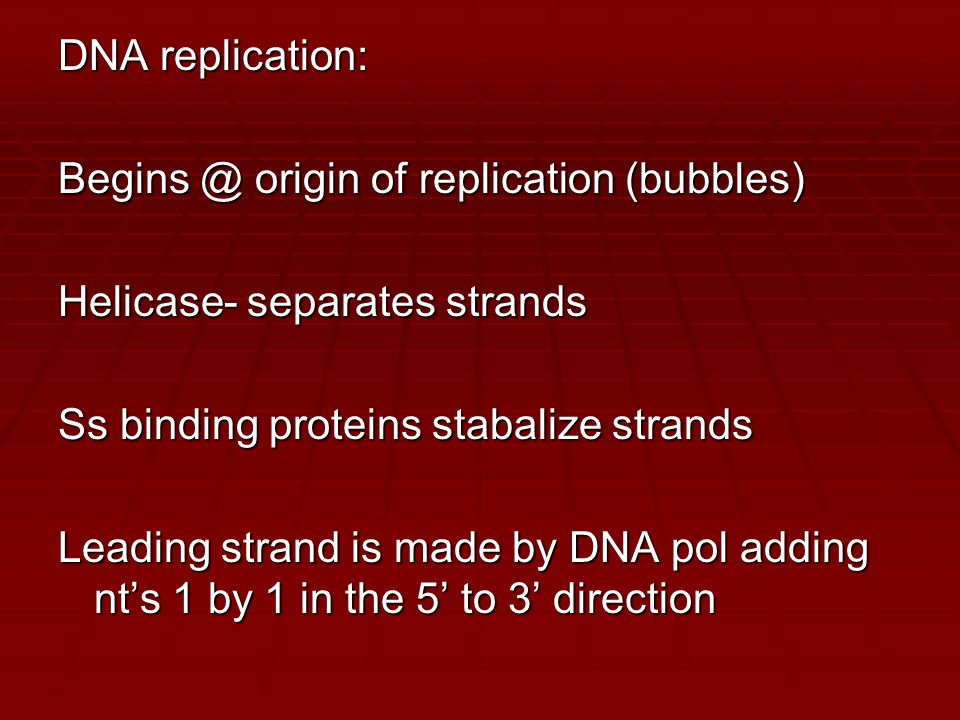 DNA replication: Begins @ origin of replication (bubbles) Helicase- separates strands Ss binding proteins stabalize strands Leading strand is made by DNA pol adding nt's 1 by 1 in the 5' to 3' direction