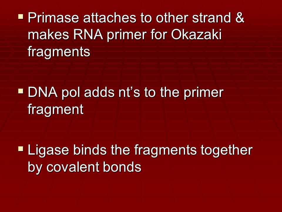  Primase attaches to other strand & makes RNA primer for Okazaki fragments  DNA pol adds nt's to the primer fragment  Ligase binds the fragments together by covalent bonds