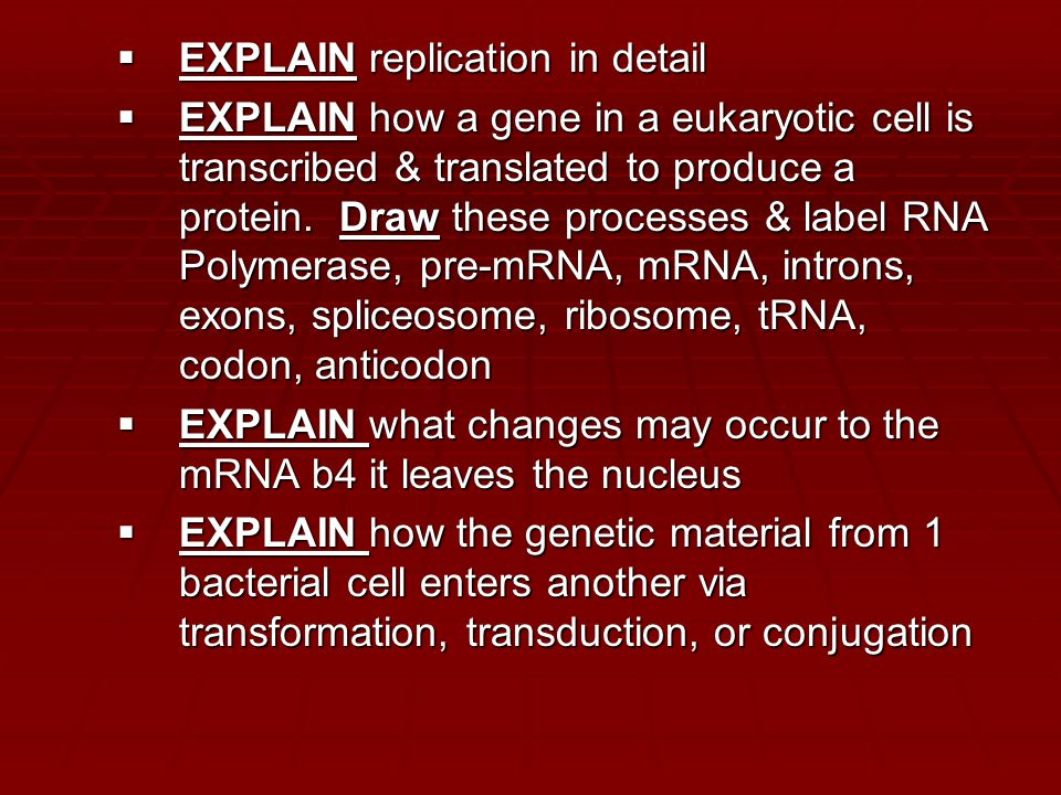  EXPLAIN replication in detail  EXPLAIN how a gene in a eukaryotic cell is transcribed & translated to produce a protein.