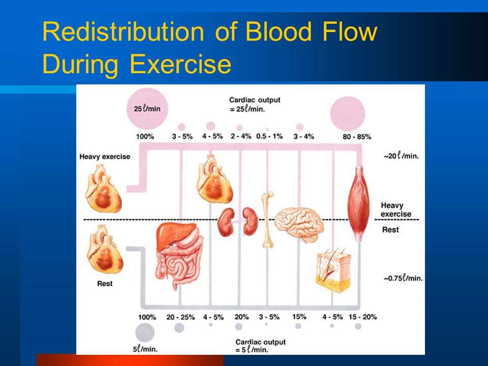 Redistribution of Blood Flow During Exercise