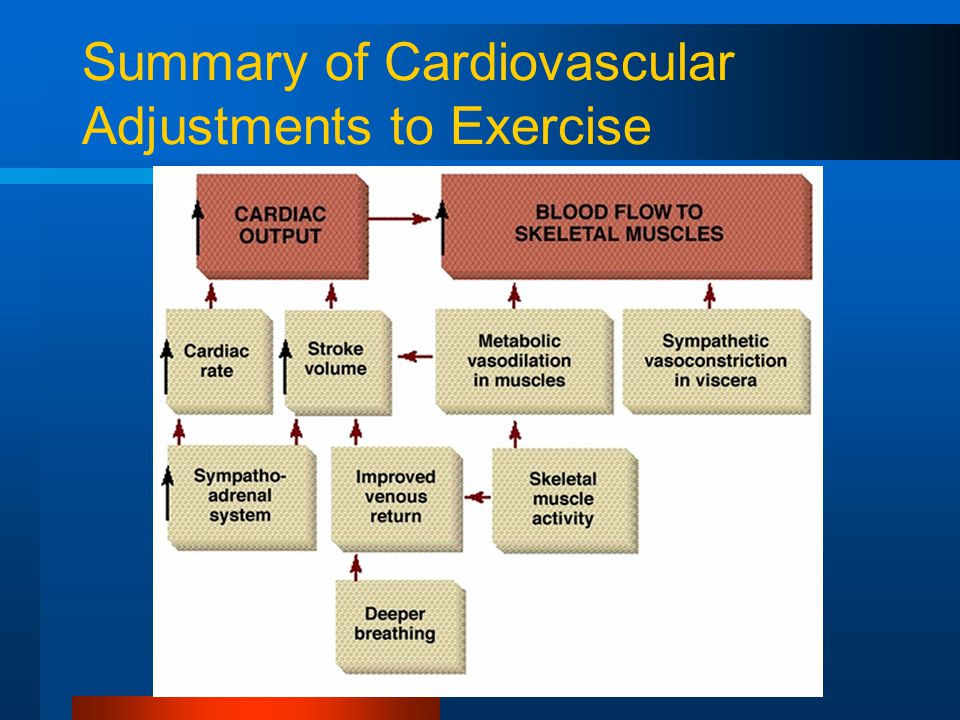Summary of Cardiovascular Adjustments to Exercise