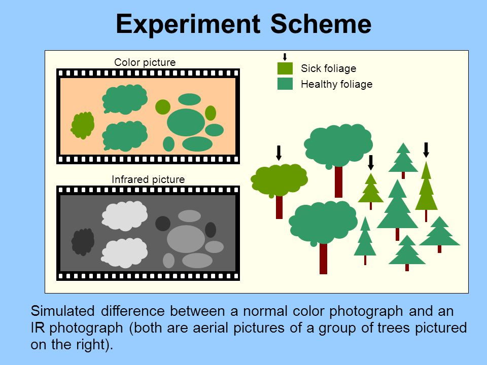 Experiment Scheme Simulated difference between a normal color photograph and an IR photograph (both are aerial pictures of a group of trees pictured on the right).