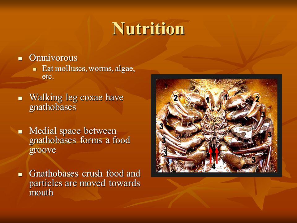 Nutrition Omnivorous Omnivorous Eat molluscs, worms, algae, etc.