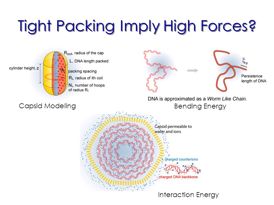 Tight Packing Imply High Forces Capsid Modeling Bending Energy Interaction Energy