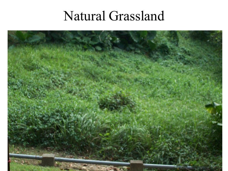 Natural Grassland