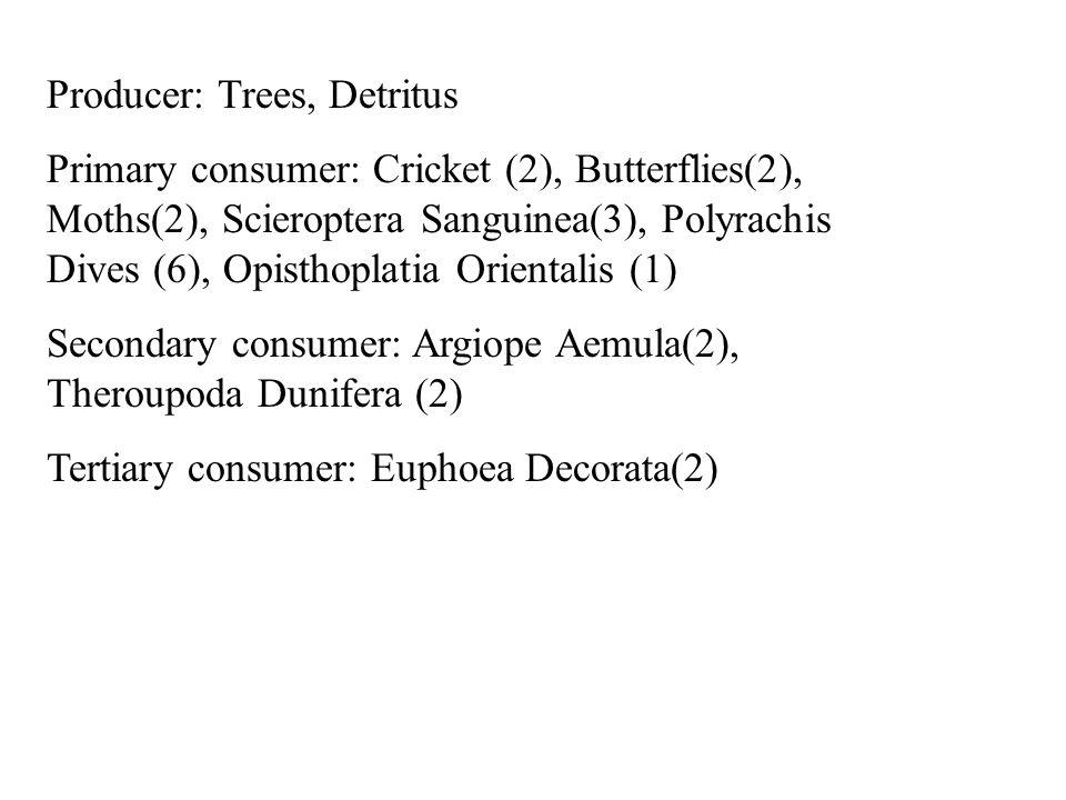 Producer: Trees, Detritus Primary consumer: Cricket (2), Butterflies(2), Moths(2), Scieroptera Sanguinea(3), Polyrachis Dives (6), Opisthoplatia Orientalis (1) Secondary consumer: Argiope Aemula(2), Theroupoda Dunifera (2) Tertiary consumer: Euphoea Decorata(2)