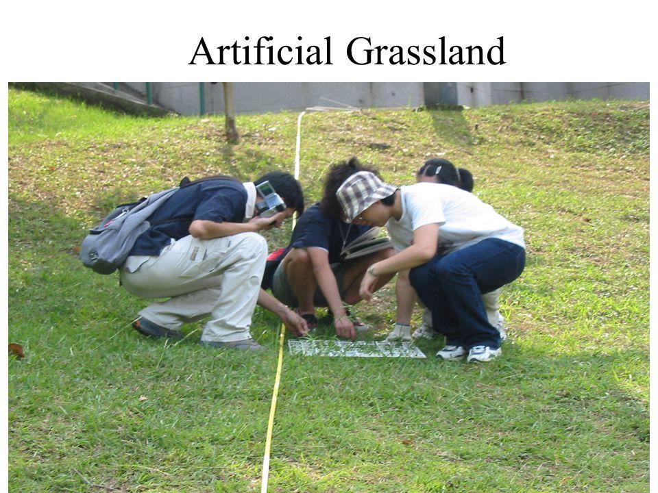Artificial Grassland