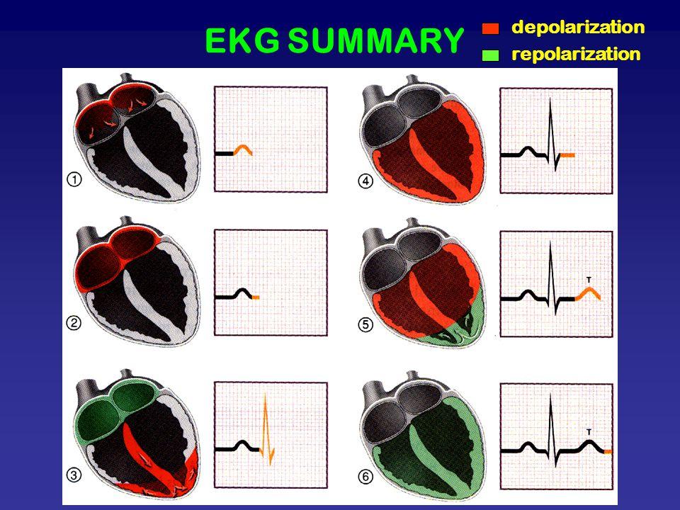 EKG SUMMARY depolarization repolarization