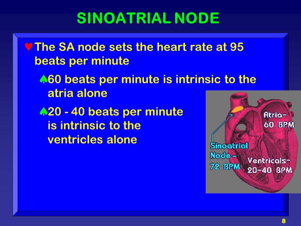 8 SINOATRIAL NODE The SA node sets the heart rate at 95 beats per minute  60 beats per minute is intrinsic to the atria alone  20 - 40 beats per min