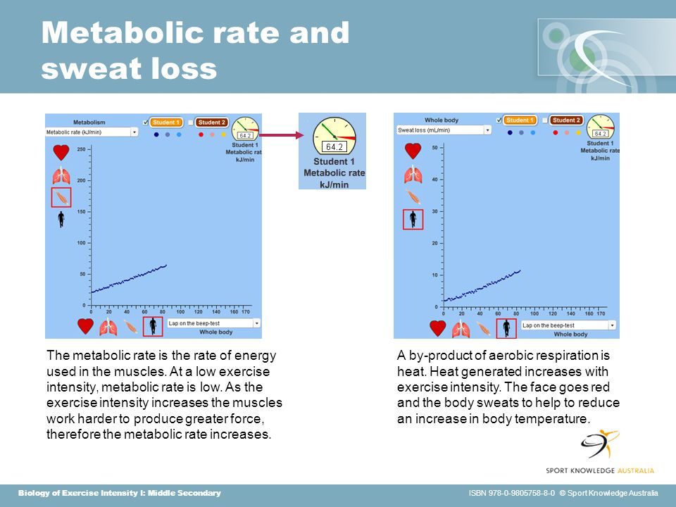 Biology of Exercise Intensity I: Middle Secondary ISBN 978-0-9805758-8-0 © Sport Knowledge Australia Metabolic rate and sweat loss The metabolic rate is the rate of energy used in the muscles.