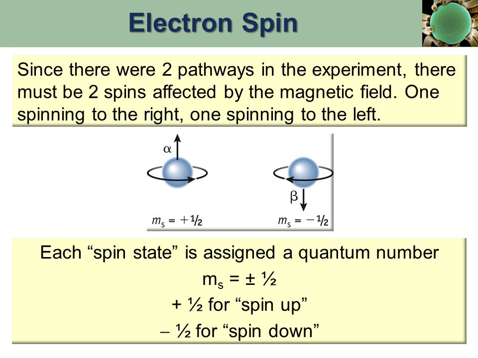 Since there were 2 pathways in the experiment, there must be 2 spins affected by the magnetic field.