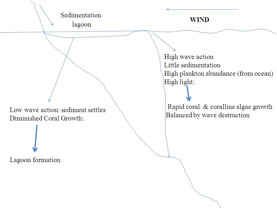 WIND Sedimentation Low wave action: sediment settles Diminished Coral Growth: Lagoon formation High wave action Little sedimentation High plankton abundance (from ocean) High light: Rapid coral & coralline algae growth Balanced by wave destruction lagoon