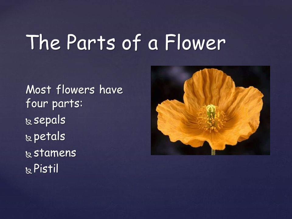The Parts of a Flower Most flowers have four parts:  sepals  petals  stamens  Pistil