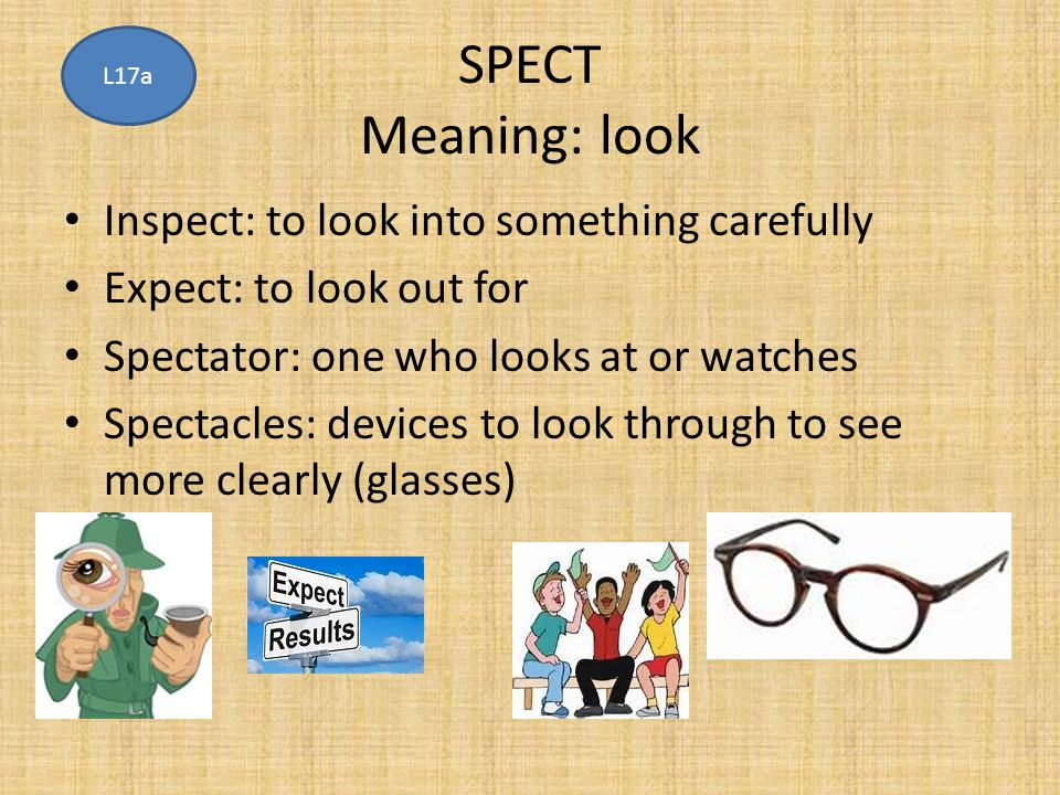 SPECT Meaning: look Inspect: to look into something carefully Expect: to look out for Spectator: one who looks at or watches Spectacles: devices to lo
