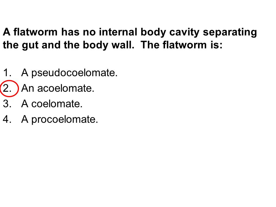 A flatworm has no internal body cavity separating the gut and the body wall.