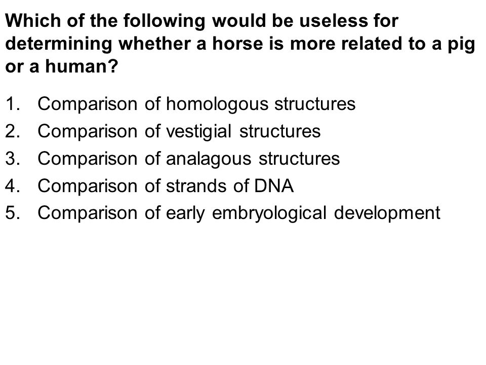 Which of the following would be useless for determining whether a horse is more related to a pig or a human.