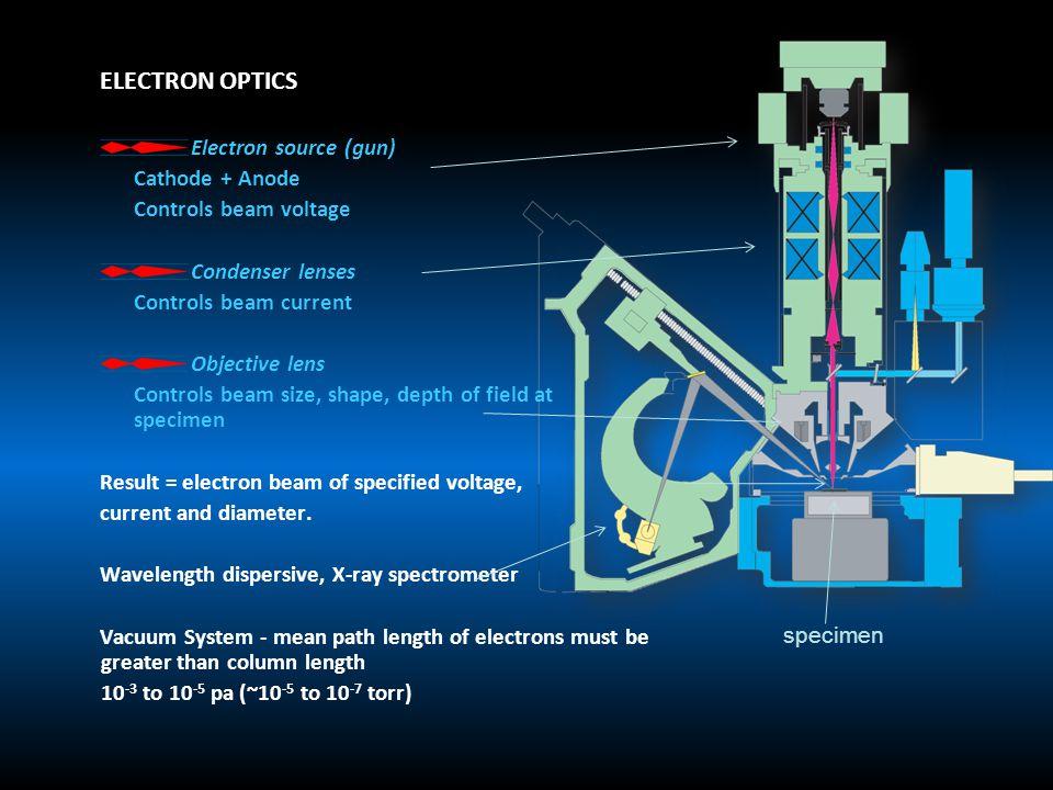 ELECTRON OPTICS Electron source (gun) Cathode + Anode Controls beam voltage Condenser lenses Controls beam current Objective lens Controls beam size,