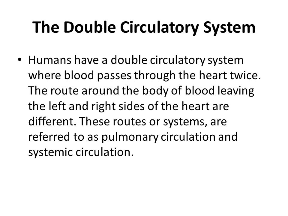 The Double Circulatory System Humans have a double circulatory system where blood passes through the heart twice. The route around the body of blood l